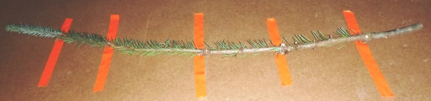 Check out the pattern of the needles.
