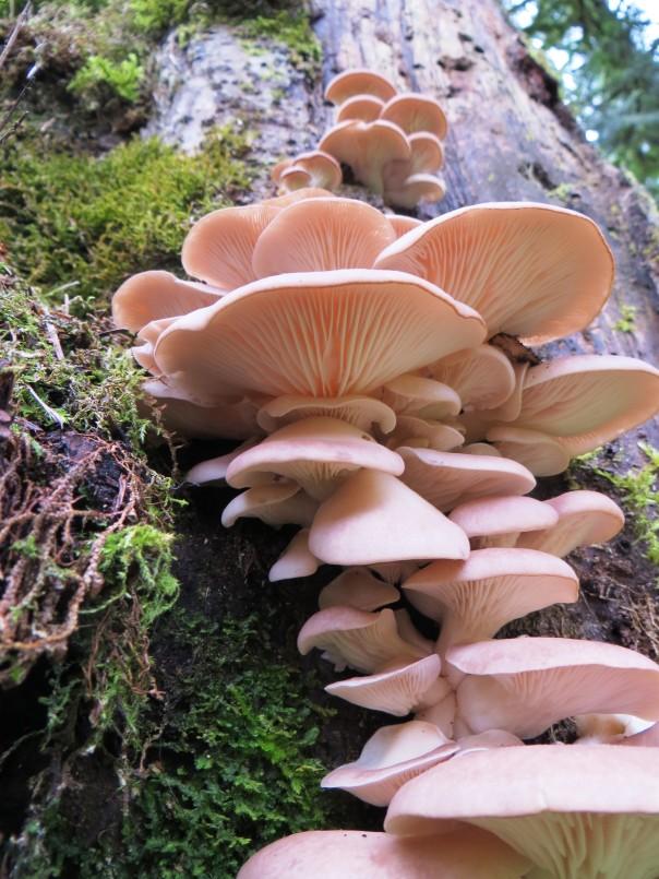 Family of fungi