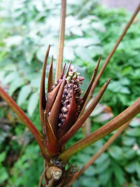 an inflorescence