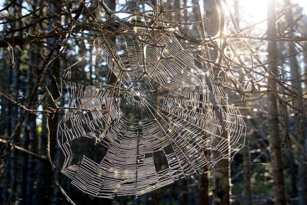 vinalhaven-2011-spider-web-700x700